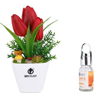 Nước hoa chậu cây trang trí taplo