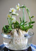Những loài hoa phong thủy mang may mắn cho gia chủ