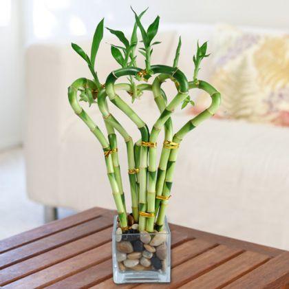 Những loại cây trồng phong thủy đem đến tài lộc cho gia chủ - Nội thất Jhome