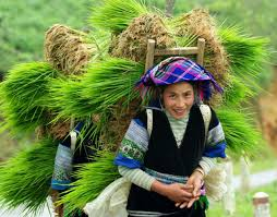 Sapa hard trekking tours 4 nights 3 days ( 2 nights on train or bus and 2 nights at homestay)