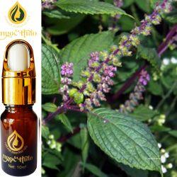 Tinh dầu Hương nhu - Ocimum Oil