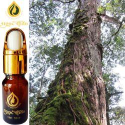 Tinh dầu Pơ Mu - Fokienia Pure Essential oil