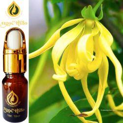 Hoa Ngọc Lan Tây - Michelia Oil