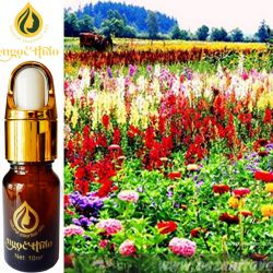 Tinh dầu Hương Ngàn Hoa - ANGELINE Fragrance Oil