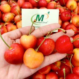 Cherry Vàng Mỹ Size 9.5