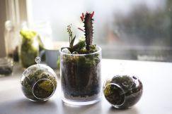 15 tuyệt chiêu trồng cây cho không gian chật hẹp