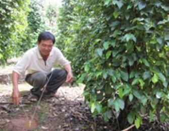 Người nông dân với hệ thống tưới nước bán tự động