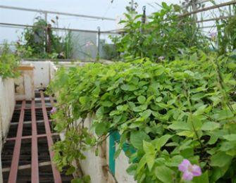 Chủ vườn 70 m2 nhàn rỗi nhờ hệ thống tưới 100 nghìn đồng