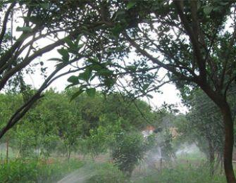 Hệ Thống Tưới Tự Động: Trên vùng đất Tỷ Phú Cam Sành