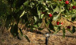 Hiệu quả tưới phun mưa trong nông nghiệp