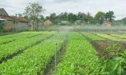 Hệ thống tưới tưới tự động trong nông nghiệp hiện đại