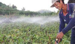 Tưới phun mưa tại đảo Lý Sơn – Giải pháp tiết kiệm tài nguyên nước