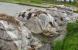 Một số biện pháp kỹ thuật cần thực hiện trong gieo cấy lúa mùa