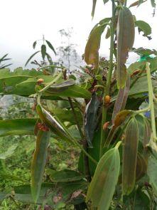 Tin bài chủ động phòng trừ sâu bệnh hại cây lâm nghiệp