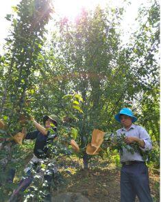 Lào Cai thu hút doanh nghiệp đầu tư vào nông nghiệp, nông thôn