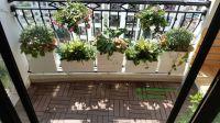 Dịch vụ trồng hoa ban công