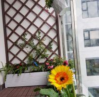 Thiết kế ban công chung cư IPG - Imperia Garden Vườn trong phố