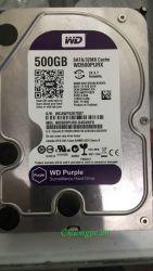 Ổ cứng Western Purple 500G