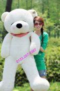 Gấu bông khổng lồ Teddy Boyds ngủ 1m6, 1m8, 2m (3 màu)