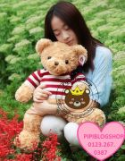 Teddy co my (70cm,80cm,1m, 1m4, 1m8)