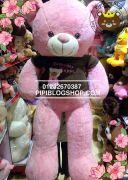 Teddy hồng áo len Gấu, lông nhung mịn (1m3, 1m5, 1m7)