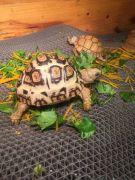 Mách bạn cách chăm sóc rùa cảnh hiệu quả nhất