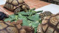 Chăm sóc rùa cảnh sống lâu trăm tuổi.