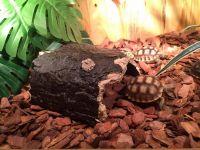 Lỗi thường gặp khi nuôi thú cưng rùa trong môi trường nuôi nhốt