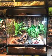 Bể kính chuyên dụng dành cho bò sát - Bể nuôi các dòng sống ẩm