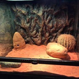 Bể kính chuyên dụng dành cho bò sát - Bể dành cho bò sát sống sa mạc