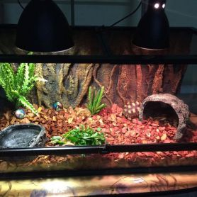 Bể kính chuyên dụng dành cho bò sát - Bể dành cho rùa cạn