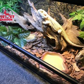 Bể nuôi bò sát - Rồng Nam Mĩ và Rồng Úc